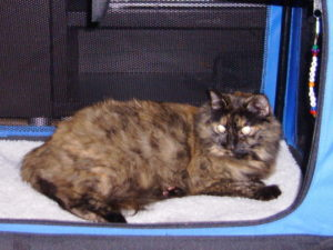 One of our pets - DMH tourtishell cat Savannah Marie