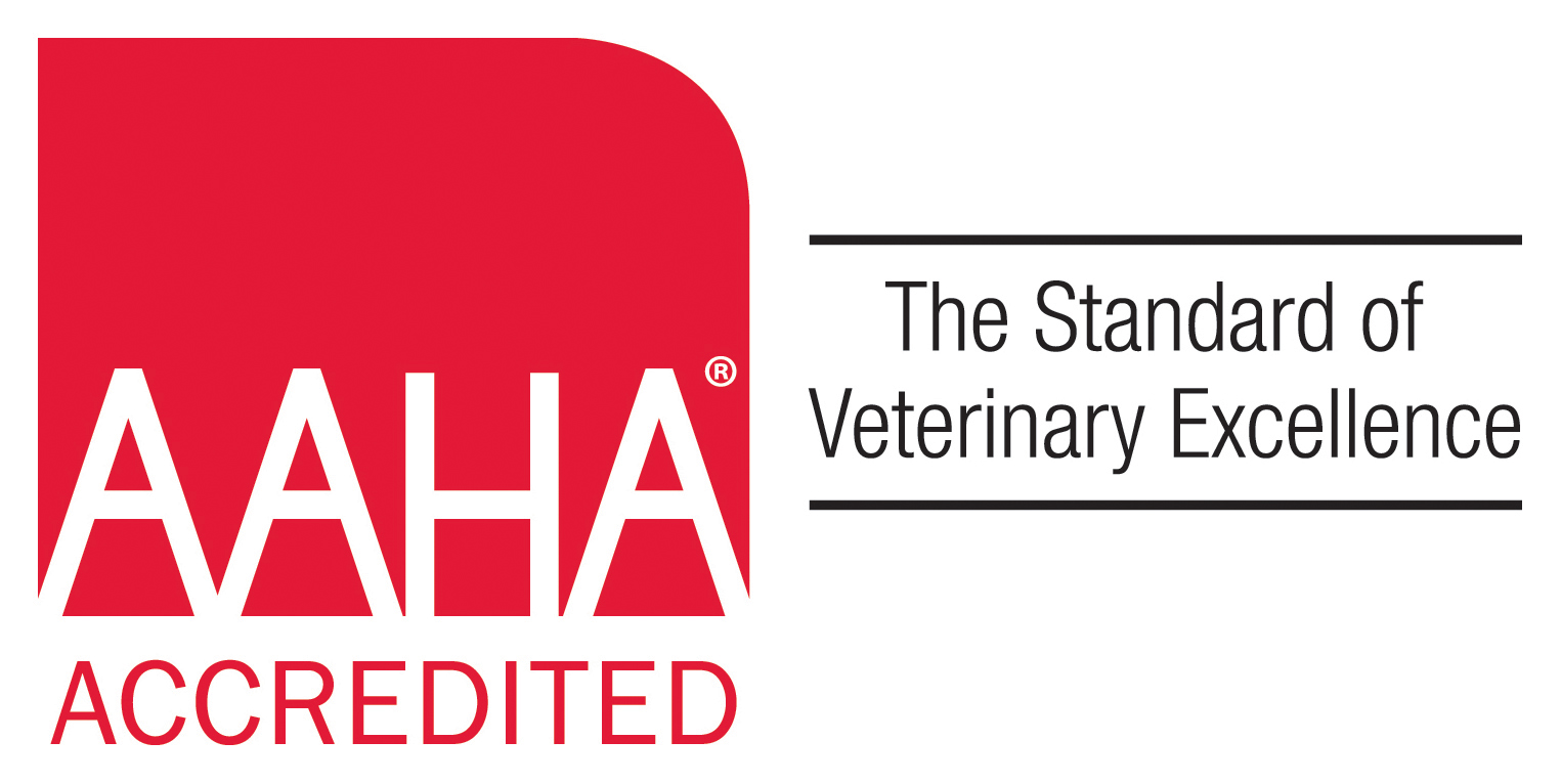 Setting The Standard For Veterinary Care In Durham And Chapel Hill