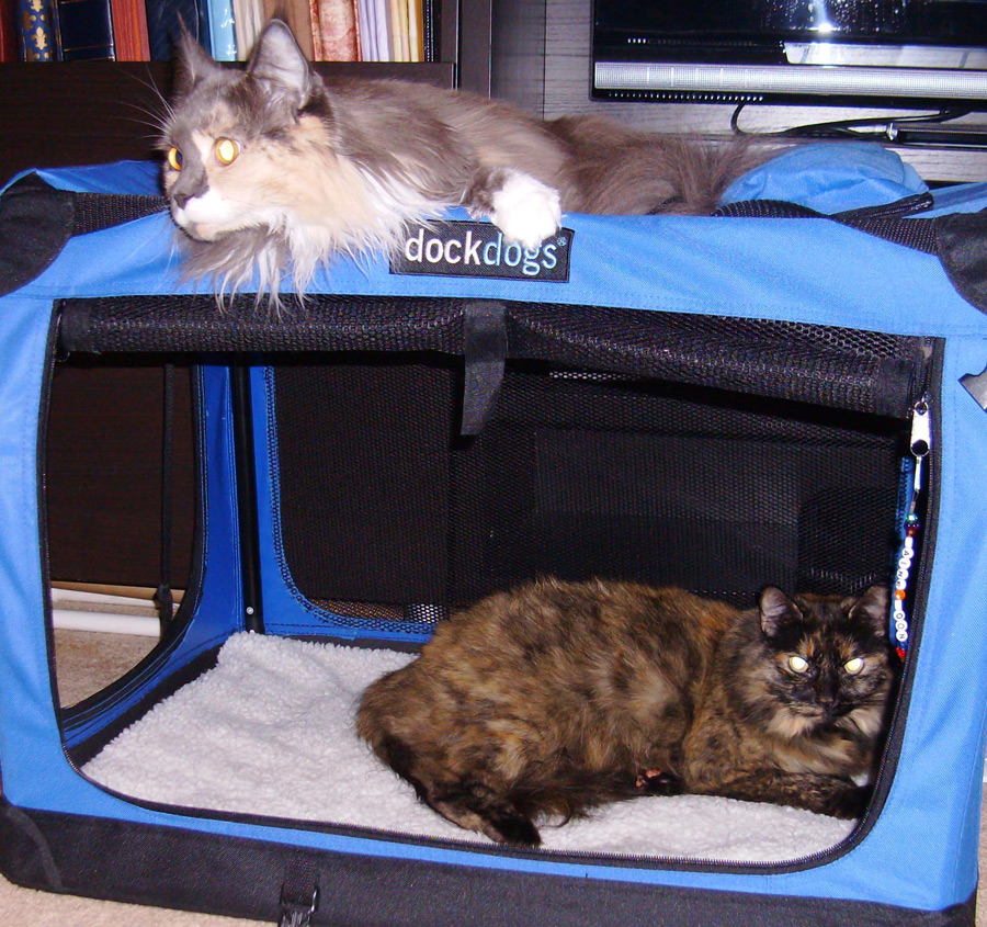 How To Travel With Cats In Car With Litter