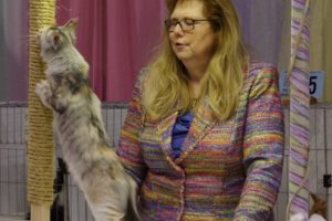 Maine Coon kitten at cat show